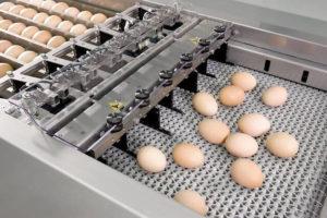 Получено разрешение на строительство здания по производству яичного меланжа в МО по проекту IR-PROEKT